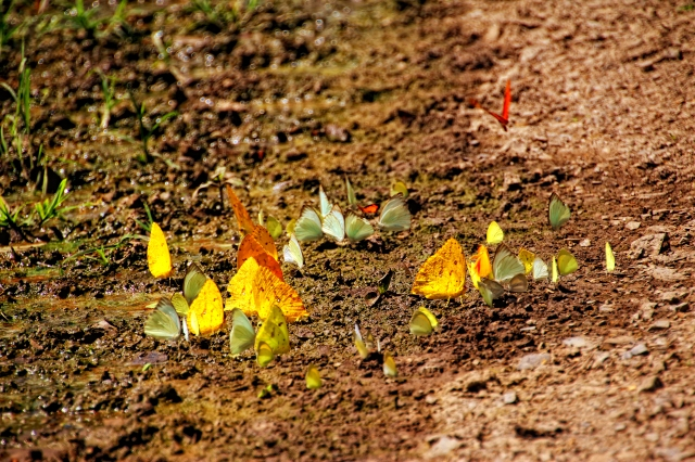 Butterflies on the middle of the trekking