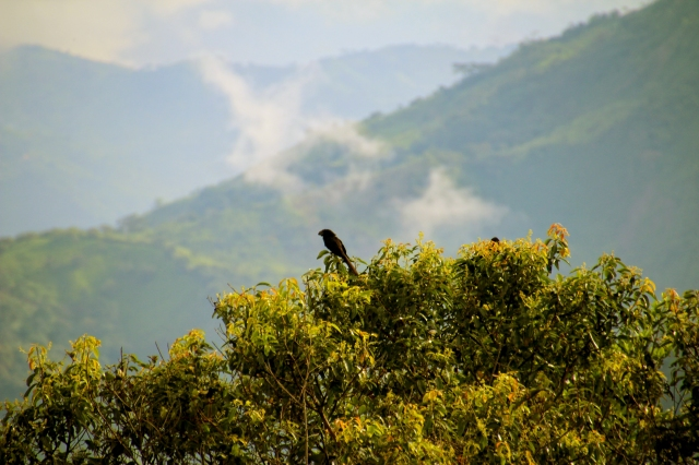Black bird reposing